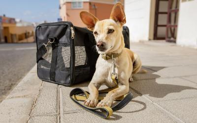 Sedating dog for air travel cherry blossoms dating.com