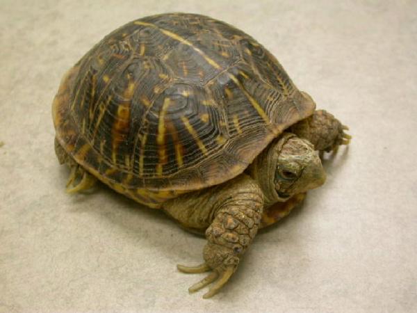 Housing Box Turtles Vca Animal Hospital