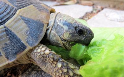 Owning Box Turtles Vca Animal Hospital