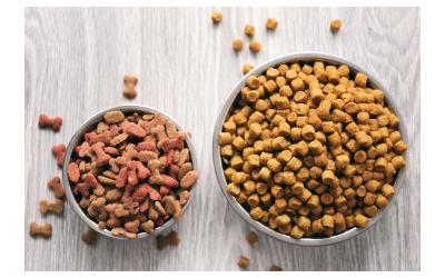 Dry, Canned, or Semi-Moist: Food Choices for Dogs | VCA Animal Hospital