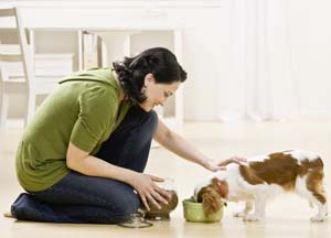 nutrition-dogs-liver-disease1