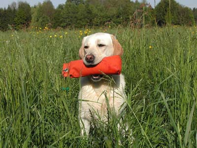 picture of a dog with a chew toy outdoors