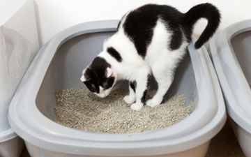 Gastroenteritis in Cats