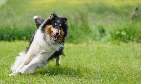 Off-Leash Training for Dogs