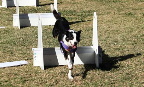flyball_cropped