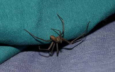 Spider Bites Vca Animal Hospital