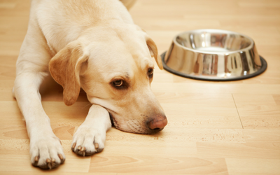Blah, Blah, and More Blah! Bland Diet Instructions for Dogs and Cats