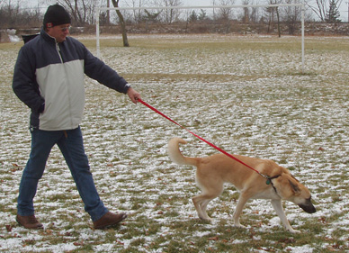 training_in_dogs_controlling_pulling_on_walks_1