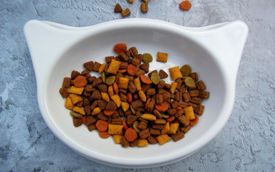 What's in My Cat's Food?: Designer Diets, Grain Free Diets
