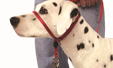 Head Halter Training for Dogs