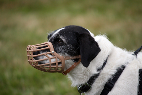 training_products_for_dogs_muzzle_training_2