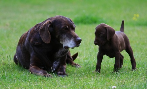 Puppy Behavior and Training - Socialization and Fear Prevention