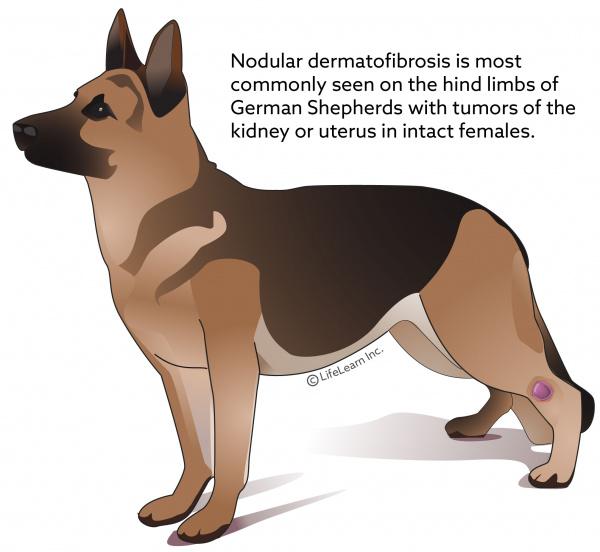 Benign Fibrous Skin Tumors Vca Animal Hospital