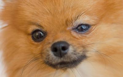 Blepharitis In Dogs Vca Animal Hospital