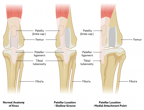 patellar_luxation_2018_ek_db-01