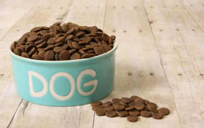 dog_food_pregnancy_in_dogs