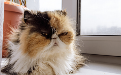 How to Recognize Pain in Aging Cats
