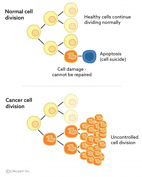cancer_cell_division_2018-01