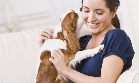 Therapeutic Massage and Your Dog
