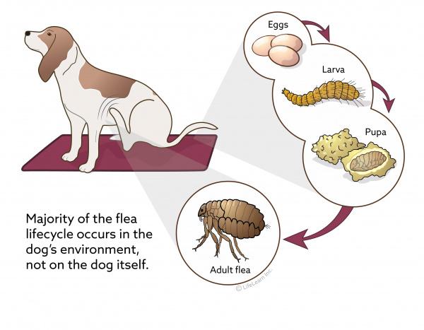 Flea Control In Dogs Vca Animal Hospital