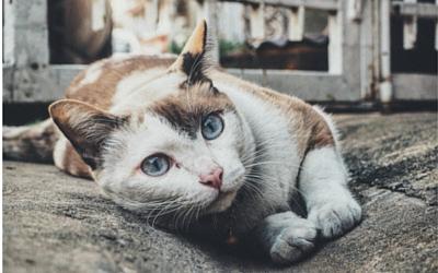 Ataxia in Cats | VCA Animal Hospital