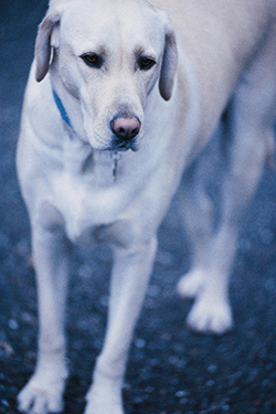 Autoimmune Skin Disease in Dogs | VCA Animal Hospital