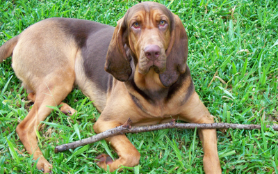 Inner Ear Infection (Otitis Interna) in Dogs | VCA Animal
