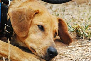 Brain Injury in Dogs | VCA Animal Hospital