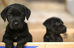 newborn puppies - Google Search   Puppies   Pinterest   It is ...