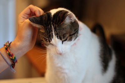 Cat Only Veterinary Practices | VCA Animal Hospital