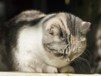 Pain Management for Cats | VCA Animal Hospital