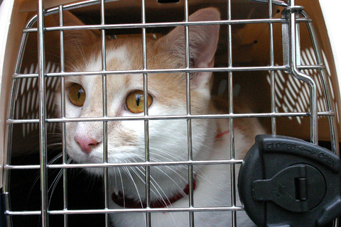 Reducing the Stress of Veterinary Visits for Cats | VCA