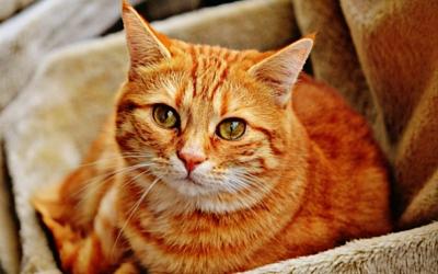 Brain Injury in Cats | VCA Animal Hospital
