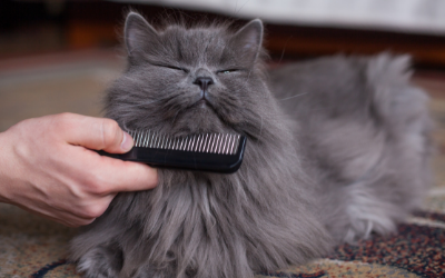 Grooming and Coat Care for Your Cat | VCA Animal Hospital