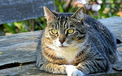 cat_diabetes_remission