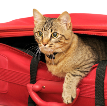 Sedating a cat for travel