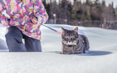 Frostbite in Cats | VCA Animal Hospital