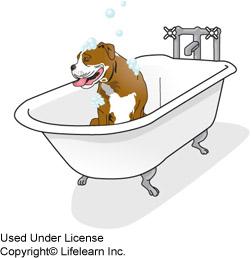 Skunk Spray and Your Dog | VCA Animal Hospital