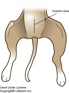 Caesarean Sections in Dogs - Post Operative Instructions ...