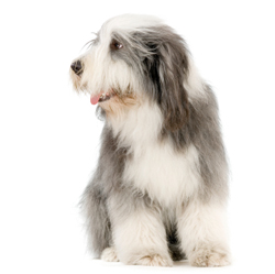 Constipation in Dogs | VCA Animal Hospital