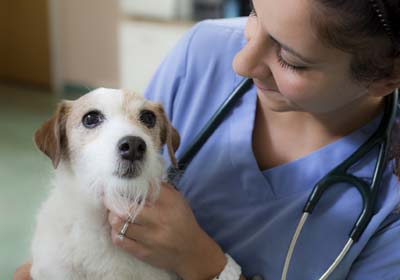 Why Does My Veterinarian Charge So Much? | VCA Animal Hospital