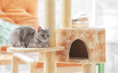 Teaching and Training a Deaf Cat | VCA Animal Hospital