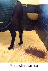 Diarrhea in Horses | VCA Animal Hospital