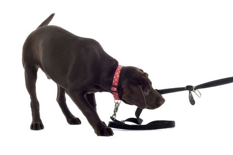 how to train an unruly puppy
