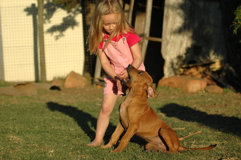 Dog Behavior Problems - Aggression - Children | VCA Animal