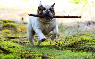 dog_fetch_1
