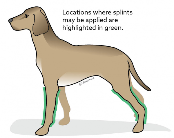 Bandage and Splint Care in Dogs | VCA Animal Hospital