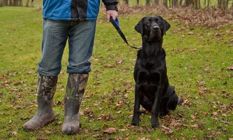 can you use ciprofloxacin for a dog