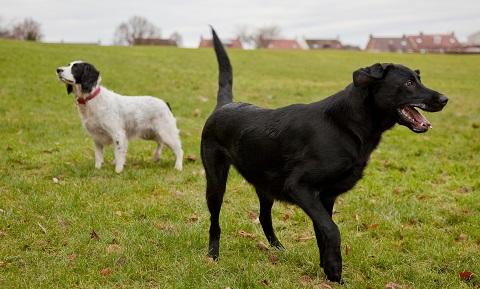 Liquid Dimenhydrinate Dosage For Dogs Jill Scott Insomnia