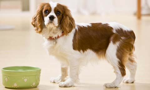 Arthritis and Nutrition for Dogs